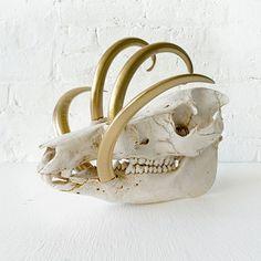 EarthSeaWarrior Wild Boar Skull 24K Gold Tusks now featured on Fab.