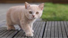 La ciencia lo confirma: Besar a un gato puede matarte