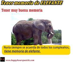 Expresión : Tener memoria de elefante.