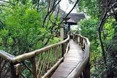 raised wooden walkway for my hill Wooden Walkways, Kwazulu Natal, Garden Bridge, South Africa, Woodland, Coast, Elephant, Stairs, Indoor