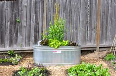 Galvanized water trough garden bed. When I have a deck I'm gonna get a couple of these. One huge 200 gallon one for my turtles, and a couple for planting water plants that the turtle water cycles through. Genious!!!