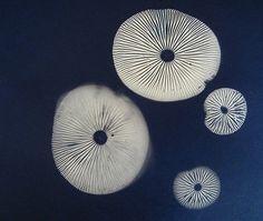 My friend Margie's amazing spore print. Geninne Z.