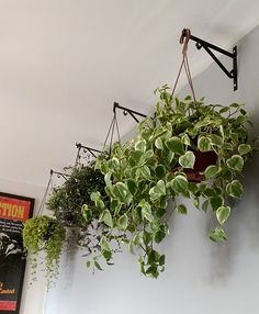 40 Most Creative Hanging Plants Ideas For Your Garden - Houzmag Hanging Planters, Garden Planters, Indoor Garden, Indoor Plants, Balcony Plants, Ivy Plants, House Plants Decor, Backyard Landscaping, Houseplants