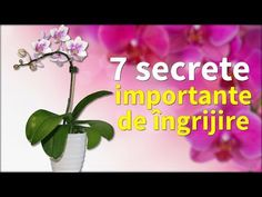 Orhideea ta va înflori tot anul. 7 secrete importante de îngrijire | Eu stiu TV - YouTube Ribbon Embroidery Tutorial, Silk Ribbon Embroidery, Ikebana, Herbs, Backyard, Flowers, Plants, Anul Nou, Shake