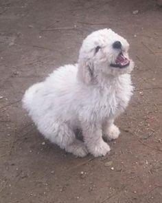 Hund - Welpe, k.A. (Mischling, Hündin, 4 Monate) Ungarn