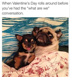 15 Reasons Why Dogs Make Better Valentines Than Humans