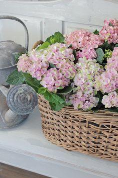 Shabby Flowers, Silk Flowers, Beautiful Flowers, Hydrangea Colors, Hydrangea Flower, Green Centerpieces, Flower Power, Vibeke Design, Spring Home Decor