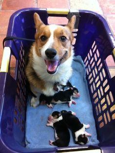 20 μητέρες σκυλιά που είναι πάρα πολύ περήφανες για τα κουτάβια τους. - Τι λες τώρα;