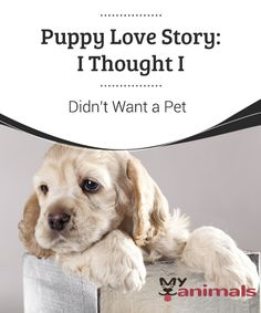 Puppy Love Story: I Thought I Didn't Want a Pet  My life was very busy... or so I thought.  Even though I was lonely, I never thought about adopting a pet.  I'd never experienced a puppy love story of my own. Many people recommended it to me, some others attempted to give me one, but I never went through with it.