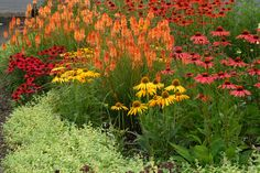 A blaze of hot pink and yellow coneflowers adds a vivid contrast to orange sherbet-shaded kniphofia in this medley of midsummer color. (Courtesy Terra Nova Nurseries)