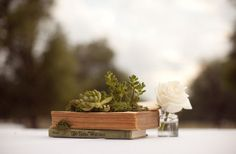 Oh cute. Book as planter for succulents. That would make a nice centerpiece. I don't know, though- I guess I think of you as having a more modern style.