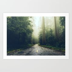 Visit Cascadia shop for misty gorgeous wilderness outdoors pictures of road trip adventures across the USA southwest west coast + Pacific Northwest Pnw. leaves redwoods roadtrip sequoia redwood tree mountain fog foggy California pine fir wanderlust