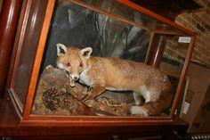 TAXIDERMY FOX AND PHEASANT