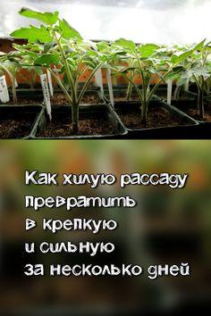 Garden Trees, Garden Plants, Small Farm, Farm Gardens, Vegetable Garden, Container Gardening, Garden Design, Home And Garden, Herbs