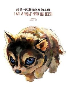 wolf from the north