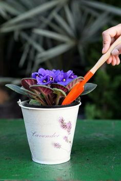 Jardim sem segredos: saiba como cuidar de violetas