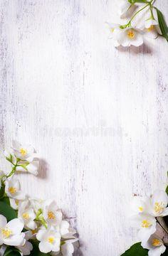 Photo about Art jasmine spring flowers frame on white background. Image of retro, elegance, blooming - 24914283 White Background Wallpaper, Flowery Wallpaper, Spring Wallpaper, Flower Phone Wallpaper, White Background Images, Background Images Wallpapers, Wood Background, Simple Iphone Wallpaper, Unique Wallpaper