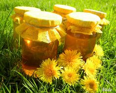 Honey of dandelion flowers Dandelion Flower, Honey, Herbs, Cukor, Flowers, Home Decor, Decoration Home, Room Decor, Herb