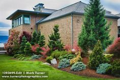Wonder what kind of conifers these are - they must truly stay narrow as they grow considering how tightly they're planted here. Dwarf conifers & Japanese Maples against home [Abies cvs. Lawn And Landscape, House Landscape, Landscape Design, Garden Design, Home Landscaping, Front Yard Landscaping, Garden Shrubs, Lawn And Garden, Shade Garden