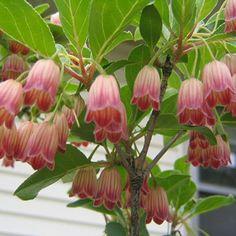 garden design with trees and shrubs Flowering Bushes, Trees And Shrubs, Trees To Plant, Bulb Flowers, May Flowers, Flower Pots, Garden Shrubs, Garden Pots, Garden Ideas