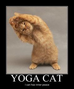 I can haz inner peace?! #yogacat #awesome #toofunny