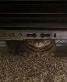 It Sees Me Funny Cats, Funny Animals, Adorable Animals, Creepy, Gato Gif, Cat Tent, Animal Jokes, Animal Funnies, Friends In Love