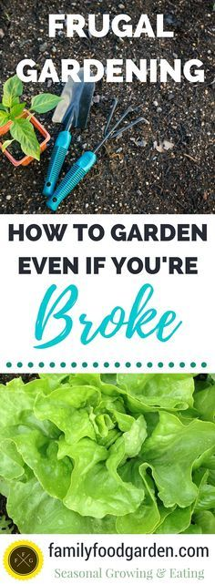 Tips for how to save money while gardening