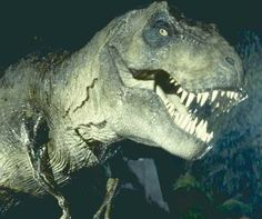 Tyrannosaurus Rex from all three Jurassic Park films.