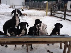 Between Dash, Ivy, Damien, Alphy, Maggie, Oscar, and Onyx, whose Puppy Hill dinner manners are the most refined?