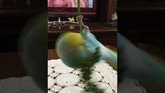 ユキちゃんのポールダンス - YouTube