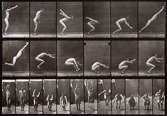 This is by Charles A. It is a series of 'stop motion' moving image photos, side and front on to capture all the stages an athlete must go to to compete in their sport. I could use this in relation to diving. Animal Movement, Animation Reference, Character Design, New Art, Photo Reference, Eadweard Muybridge, Design Reference, Animation Tutorial, Character Design References