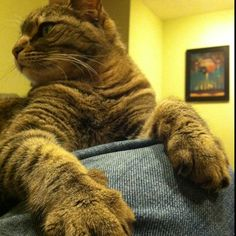 Looks just like Boosie, giant paws!