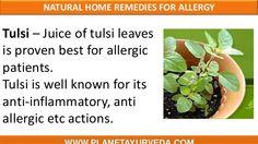 natural-herbal-remedies-for-allergy-17-638.jpg (638×359)