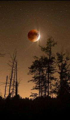 Magical beauty of a Blood Moon . Moon Photos, Moon Pictures, Nature Pictures, Moon Photography, Scenic Photography, Imagen Natural, Shoot The Moon, Moon Magic, Moon Lovers