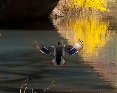 Central Park Coming in for a landing! by Lumn8tion, via Flickr