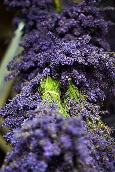 ♡lavanda - #Lavender