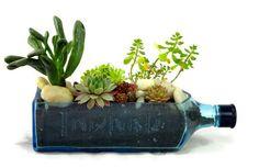 Bombay Saphire planter