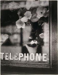 Brassaï: Chat Colette, 1938. Source: Centre Georges Pompidou, via Réunion des Musées Nationaux.