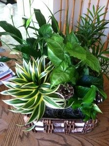Indoor plants - nice placement together