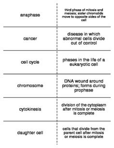 24 Best Life Science Vocabulary Flash Cards For Life Science