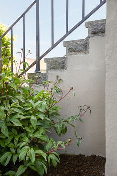 Mange glemmer grunnmuren når de skal male huset, og tenker ikke over hvor viktig en velholdt grunnmur er for totalinntrykket av huset. En pen grunnmur, malt i en vakker farge, underbygger husets eleganse og skaper en helhet. Exterior Colors, Malta, Stairs, Colours, Plants, Home Decor, Malt Beer, Stairway, Decoration Home