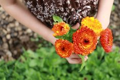 Want to grow calendula in your own garden? Check out these tips on how to grow and use calendula flowers!