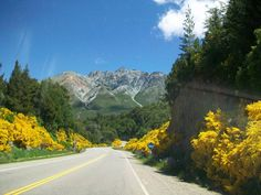 Retamas en Flor... Camino a El Bolsón. Chubut. (Entre lago Mascardi y lago Guillermo)