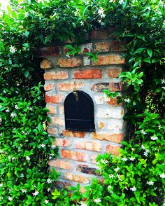 Confederate jasmine planted around brick mailbox