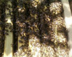 Stup de albine primavara.
