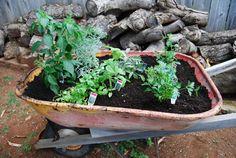 Plant a Herb Garden with an old Wheelbarrow.