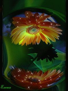 Gifs tan bonitos que no te cansará verlos Beautiful Flowers Images, Flower Images, Flowers Gif, Exotic Flowers, Gifs, Moving Photos, Glitter Graphics, Gerbera, I Wallpaper