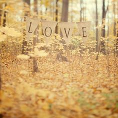Autumn Photography, Forest, Yellow Leaves, Romantic Landscape Photograph, Rustic, Wedding, Mustard Yellow - All is love. $30.00, via Etsy.