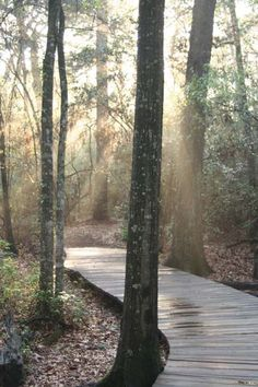 Houston Arboretum & Nature Center       1 / 3 Previous imageEnlargeNext image  4501 Woodway  Houston TX 77024  Neighborhood:Memorial Park/Washington Corridor  Phone: (713) 681-8433
