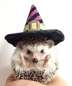 R.I.P. Biddy the hedgehog